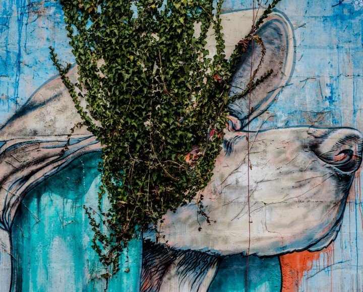 Guide to Vienna's Street Art